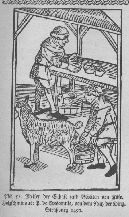 Melken der Schafe und Bereiten von Käse