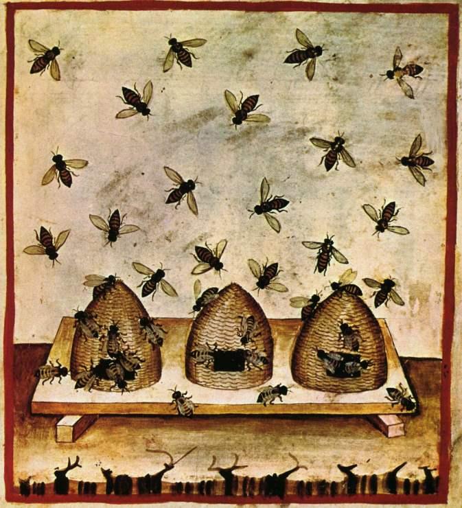 Bienenkörbe - Tacuinum Sanitatis
