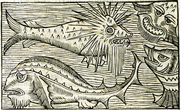 Imaginäre Monster - Olaus Magnus Historia de Gentibus Septentrionalibus Rom 1555